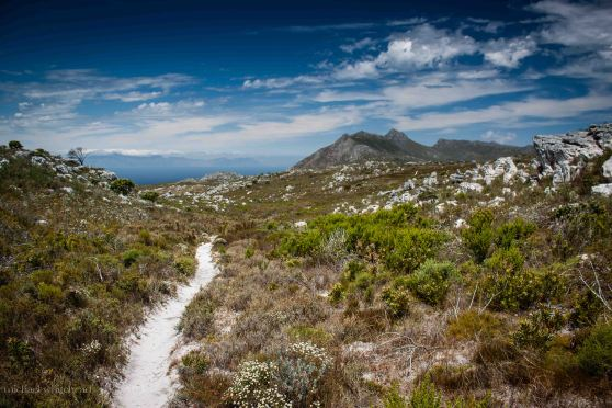 Red Hill fynbos track